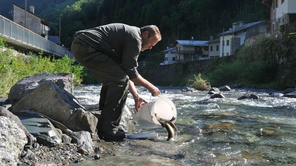 immissione pesca